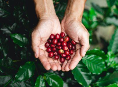 Hoe zorg je dat er koffieboeren blijven bestaan?